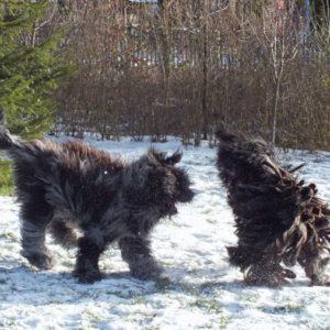 zimowe-szalenstwo